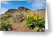 Meadow Of Arrowleaf Balsamroot Greeting Card