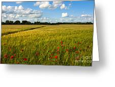 Meadow Of Poppies Greeting Card