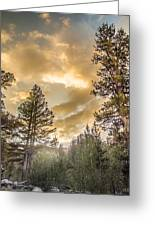 Meadow Sunset Gold Greeting Card