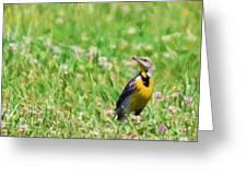 Meadowlark In The Wildflowers Greeting Card