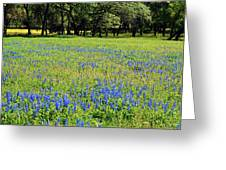 Meadows Of Blue And Yellow. Texas Wildflowers Greeting Card