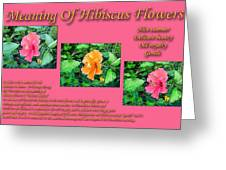 Meaning Of Hibiscus Flowers Greeting Card