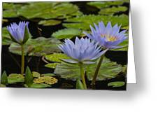 Meditative Garden Greeting Card