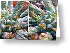 Medusa Succulent In Stereo Greeting Card