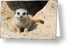 Meerkat Baby Greeting Card
