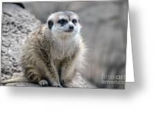 Meerkat Is Waiting Greeting Card