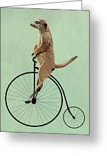 Meerkat On A Black Penny Farthing Greeting Card