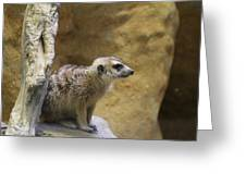 Meerket - National Zoo - 01135 Greeting Card by DC Photographer