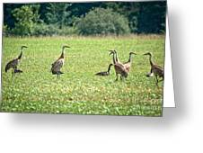 Meeting Of The Cranes Greeting Card