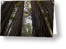 Meeting Of The Sequoias Greeting Card