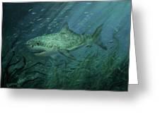 Megadolon Shark Greeting Card
