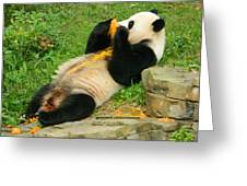 Mei Xiang Chowing On Frozen Treat Greeting Card