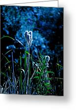 Melba Cattails Greeting Card