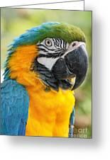 Mele E Manono Ia Ea Macao Tropical Birds Of Hawaii Greeting Card