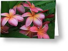 Melia Hae Hawaii Pink Tropical Plumeria Keanae Greeting Card