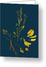 Melilotus Arvensis Field Melilot Greeting Card