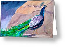 Mellow Peacock Greeting Card
