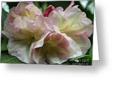 Mellow Pink Greeting Card