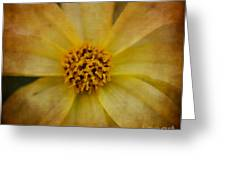 Mellow Yellow  2 Greeting Card