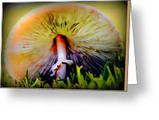 Mellow Yellow Mushroom Greeting Card by Karen Wiles