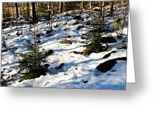 Melting Snow In A Forest In Late Winter Greeting Card