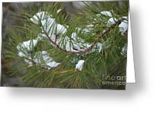 Melting Snow In The Pines Greeting Card
