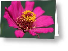 Memories Of Summer Greeting Card