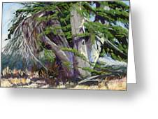 Mendocino Cypress II Greeting Card