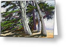Mendocino Cypress Greeting Card