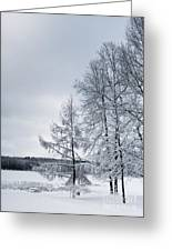 Mendon Pond Trees Greeting Card