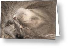 Meowww I Have A Headache Greeting Card