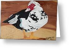 Merganser Duck Painted On Cedar Greeting Card