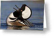 Merganser Showing Off Greeting Card