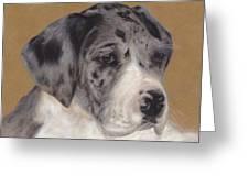 Merle Great Dane Puppy Greeting Card