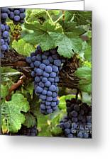 Merlot Clusters Greeting Card