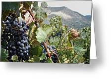 Merlot Ready Greeting Card