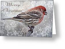 Merry Christman Finch Greeting Card Greeting Card