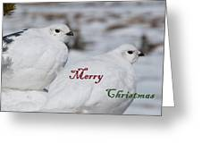 Merry Christmas - Winter Ptarmigan Greeting Card