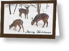 Merry Christmas Card - Whitetail Deer In Snow Greeting Card