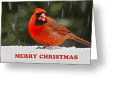 Merry Christmas Cardinal Greeting Card