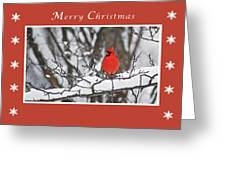 Merry Christmas Male Cardinal Greeting Card