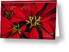 Merry Christmas - Poinsettia  - Euphorbia Pulcherrima Greeting Card