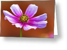 Merry Cosmos Floral Greeting Card
