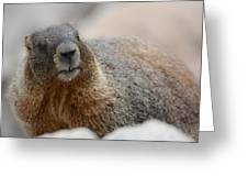 Merry Marmot Greeting Card