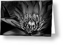 Metal Lotus Greeting Card