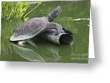 Metal Turtle Greeting Card