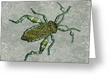 Metallic Green And Gold Prehistoric Insect  Greeting Card
