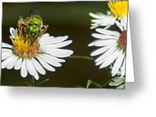 Metallic Green Wasp Greeting Card