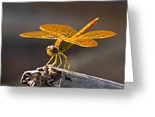Mexican Amberwing Greeting Card