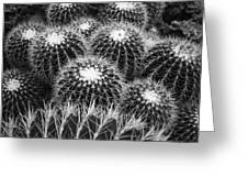 Mexican Golden Barrel Cacti Greeting Card
